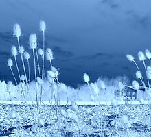 Common Teasles in  Blue  featured in The World As We See It , or as we missed it. by ©The Creative  Minds
