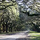 Historic Wormsloe Avenue by Julie's Camera Creations <><