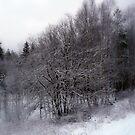 Delicate Winter Beauty by HELUA