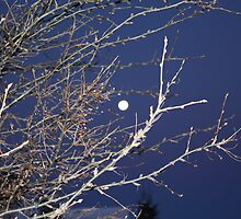 Full Moon by eoconnor