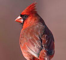 Suave Mr. Cardinal  by Bonnie T.  Barry