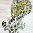 Cabbage (not so) White butterfly  by Jessica Lister