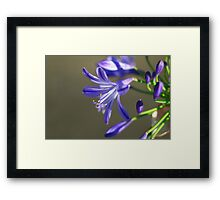 First in love Framed Print