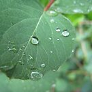 Raindrops keep falling on my leaf. by ellismorleyphto