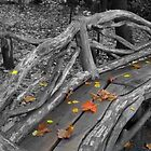 Fall with Selective Colouring by Amy Hale