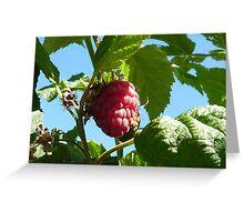 Raspberry dreaming Greeting Card