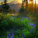 Mount Rainier Sunburst by Inge Johnsson