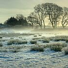 The Frozen Meadow by VoluntaryRanger