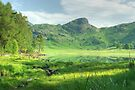 Mountain Meadow by a Green Tarn by Jamie  Green
