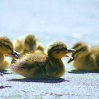 Fuzzy Ducks by Adam Jones