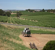 Miles and Miles from Maxwells Mead, McLaren Vale by ellismorleyphto