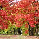 Beautiful Trees by Esperanza Gallego