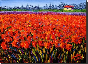 Holland Tulip Field by sesillie
