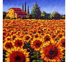 Provençal Sunflowers Photographic Print