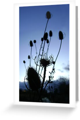 Teasels (Scottish streamside, November) by armadillozenith