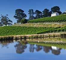 Tinderbox Vineyard by Chris Cobern