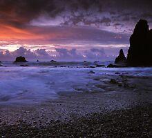 Seal Point, West Coast. by Michael Treloar