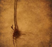 Roots (without words) by Tia Allor-Bailey