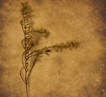 Weeds (without words) by Tia Allor