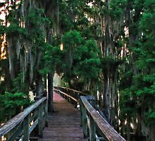 Cypress Pier by Rick  Bender