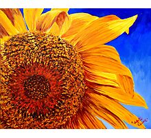Backlit Sunflower Photographic Print