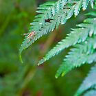 Insect on fern by Jaime Pharr