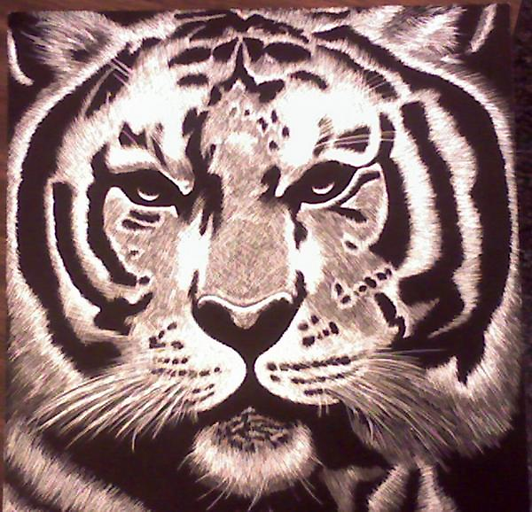 Tiger ( Sratch Board) by Courtney Hill