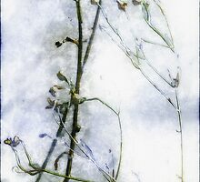 Snowstalks by RC deWinter