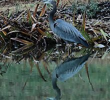 December 31 ends with a Great Blue Heron by Dennis Rubin IPA
