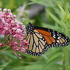 Monarch in the Prairie by cjbenck