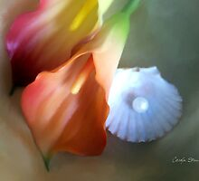 Calla Pearl by Carolyn Staut