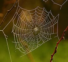 web by Cheryl Ribeiro