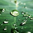 raindrops by lisaellen