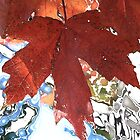 Leaves on a Lake ! by Sharon Hagler