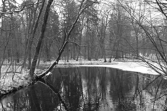 Winter Scene by Paul Finnegan