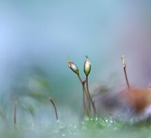 Lensbaby Moss II by Sharon Johnstone