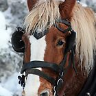 Got My Blinders On! by Alyce Taylor