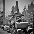 Mule, Camp 18, Oregon by Pete Janes