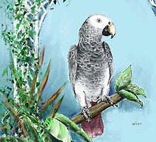 African Grey Parrot by arline wagner