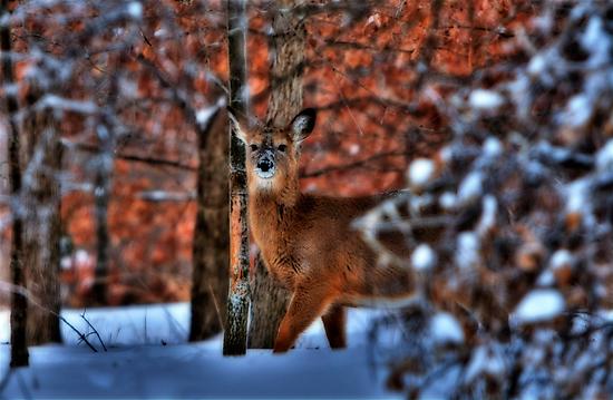 Deer Park by Tim Wright