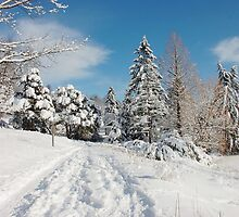 Winter Scenes 3 by Elaine  Manley