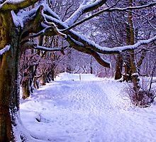 A Woodland Walk by Lynne Morris