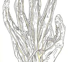 Hand Dissection, Superficial by MarionBlack