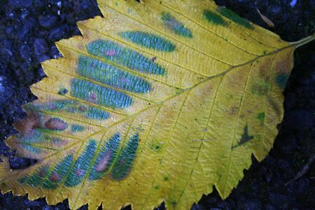Fallen Leaf in Blue and Green
