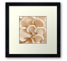 Marvelling the Mushroom - II Framed Print