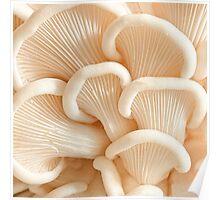 Marvelling the Mushroom - II Poster