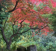 Red Acer Tree by Louise Norman