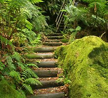 Fern Bower Walk by Michael Matthews