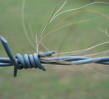 Barb Wire by jayded