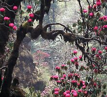 Wild woods, Nepal by photoartindia